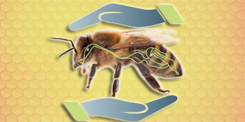 probiotics for bees